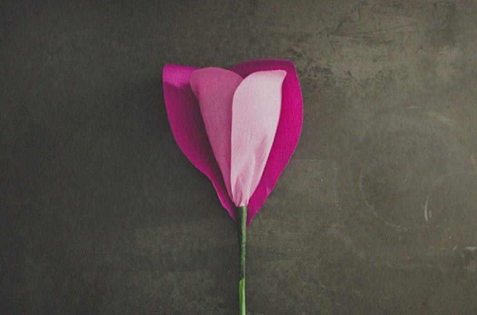 Пышная «шапка» розы