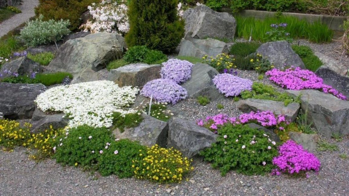 Растения в рокарии