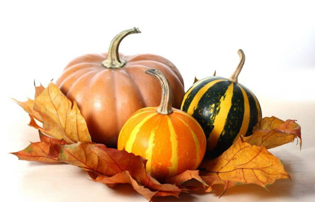 Гарантией продолжительного сохранения вкусовых и товарных качеств свежей тыквы является грамотно проведенный сбор урожая.