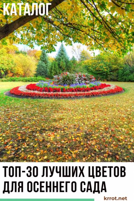 осенние цветы в саду названия и фото