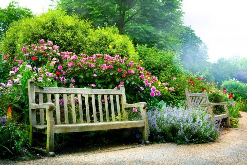 парковые розы фото с названиями