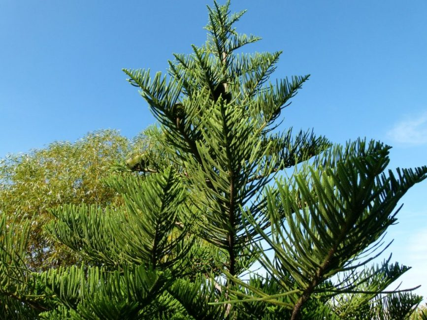 Внешний вид дерева
