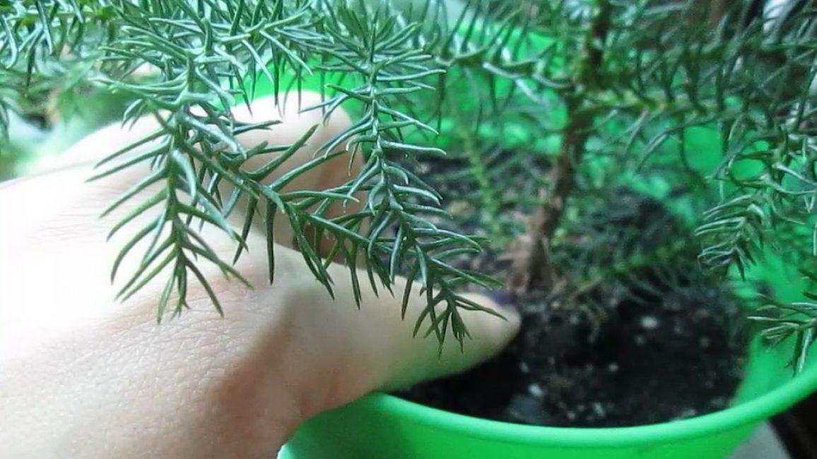 Удаление пораженных ветвей