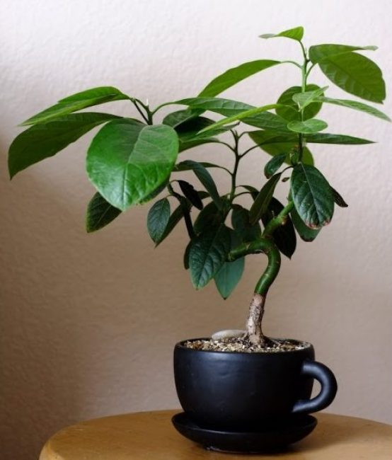 Красивое оформление растения дома