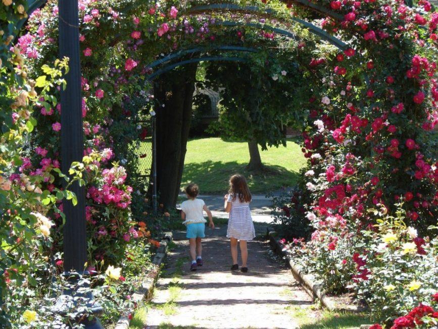 Самый эффектный вид опоры для плетистого кустарника - арка
