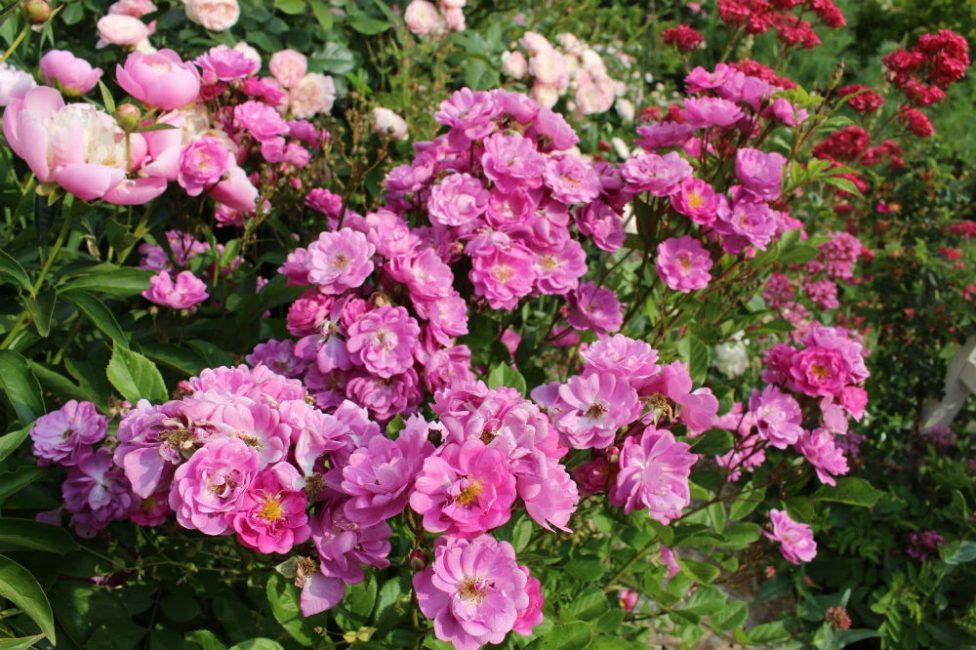 Красочное цветение длительное время