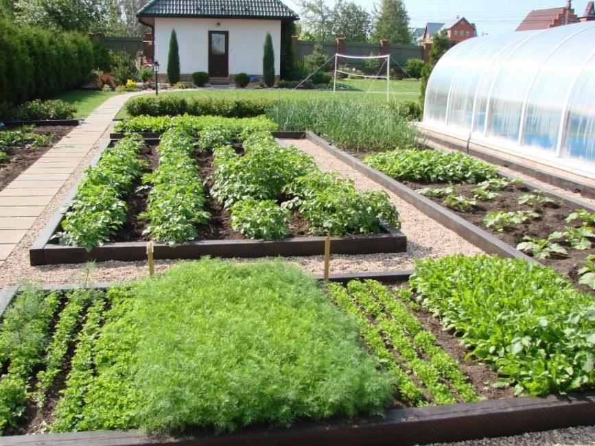 Композиция из овощных культур