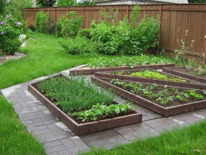 Мини-огород из овощной зелени