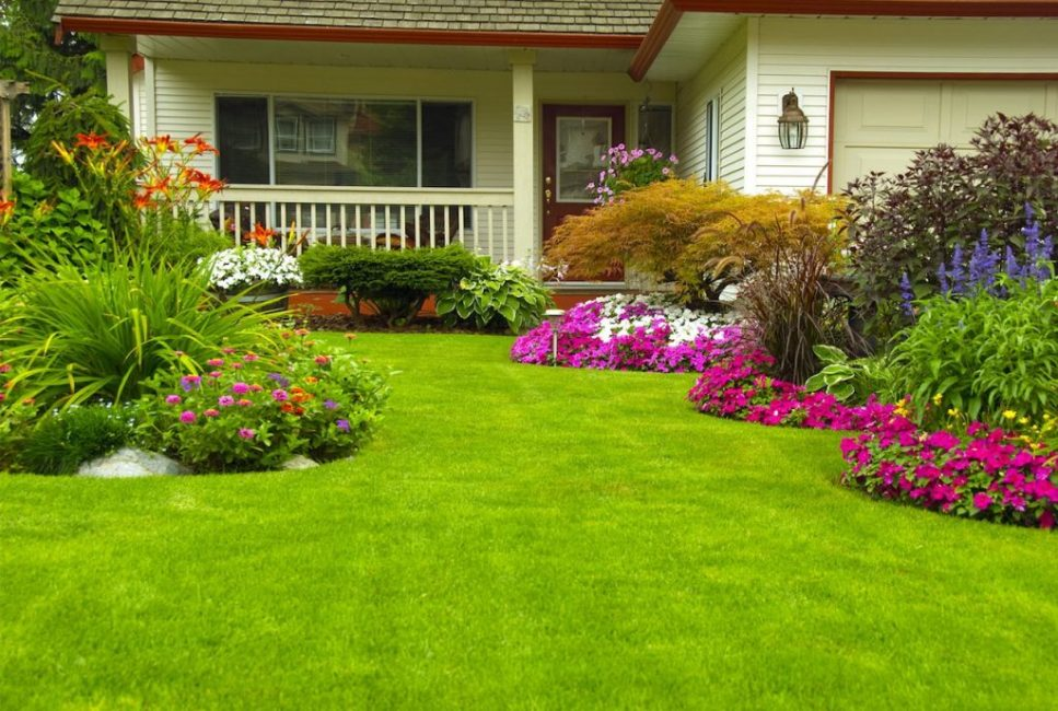 Цветущий сад без традиционных пешеходных дорожек