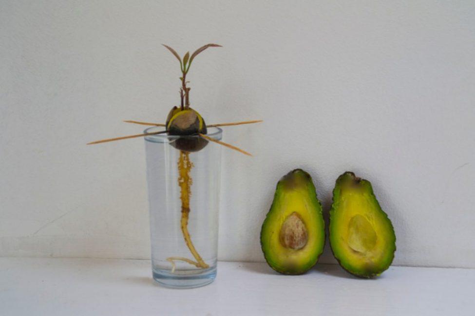 Открытый способ проращивания