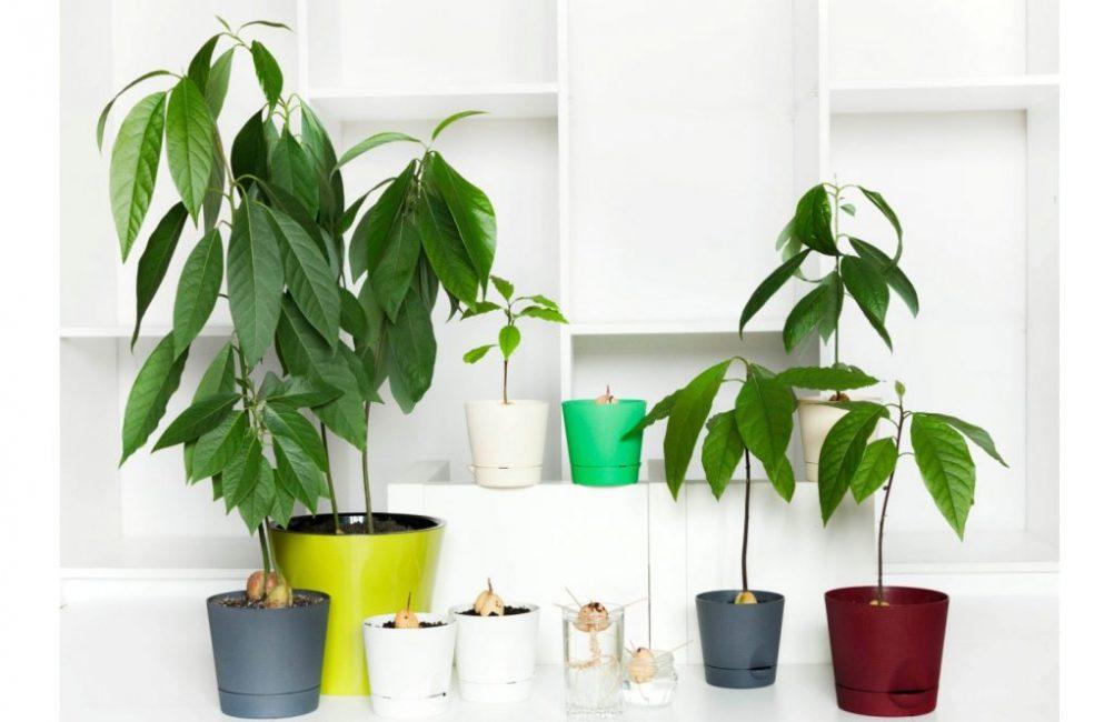 Дерево разных размеров в горшках