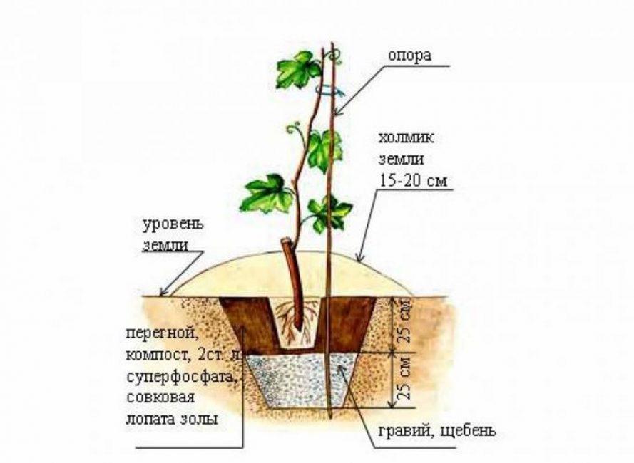 Примерный вид простой ямы для высадки винограда