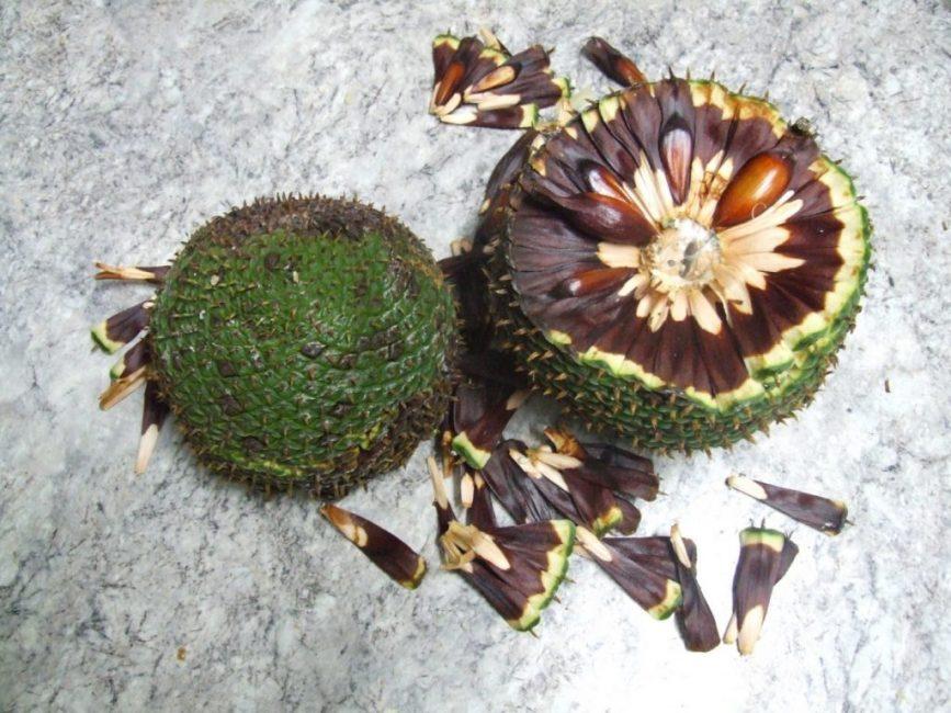 Внешний вид семян