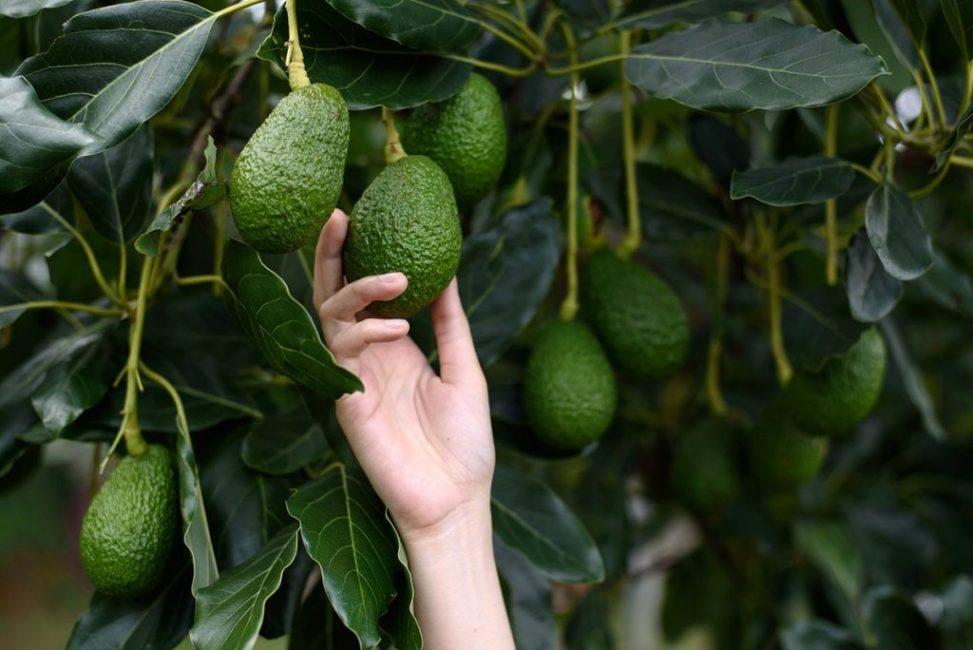 Плод в природе