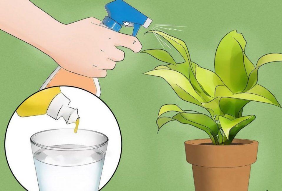 Борьба с вредителями на комнатных растениях