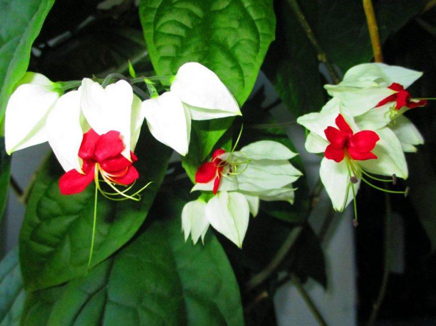Фото цветков крупным планом
