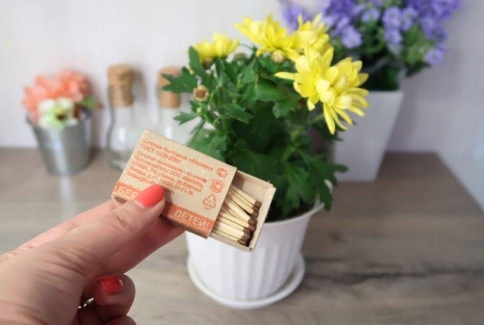 Как избавиться от мошек на цветах с помощью спичек