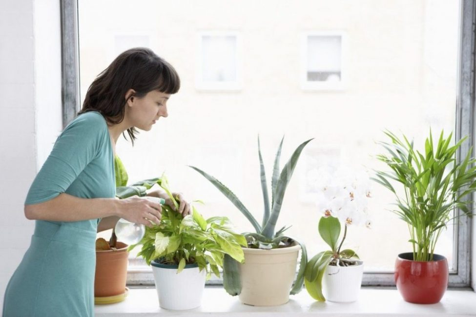 Опрыскивание верхней части растения