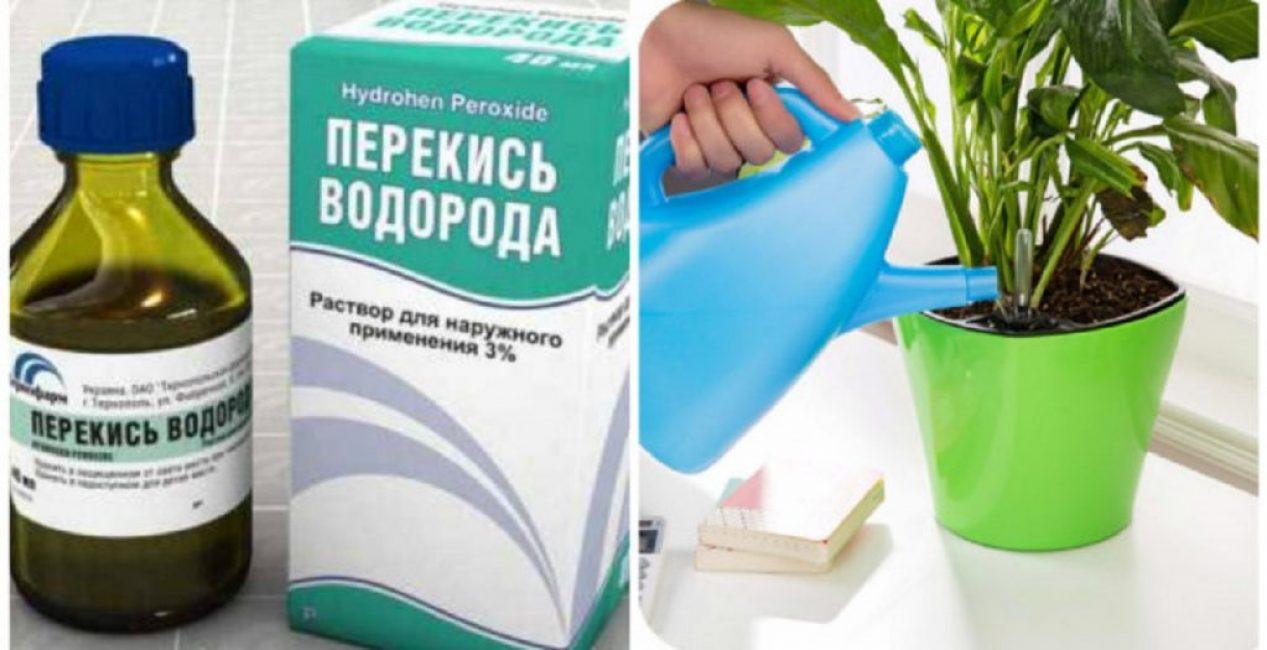 Перекись водорода от мошек