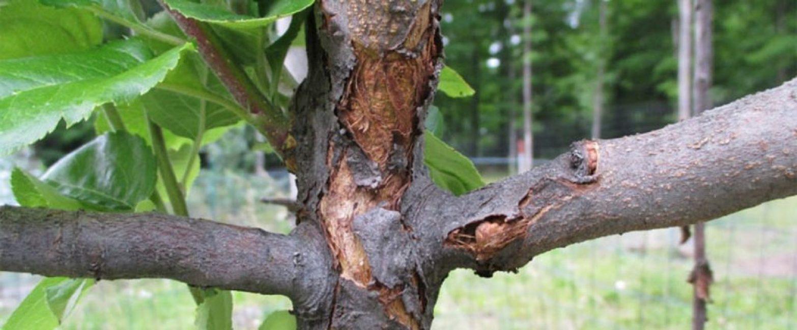 Последствия грибковых заболеваний растения
