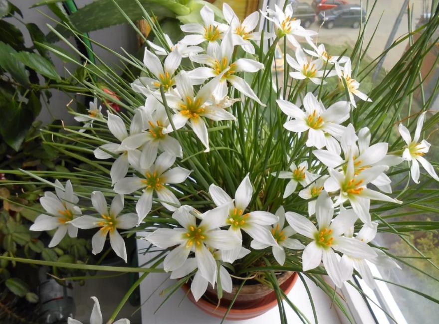 Растение на подоконнике