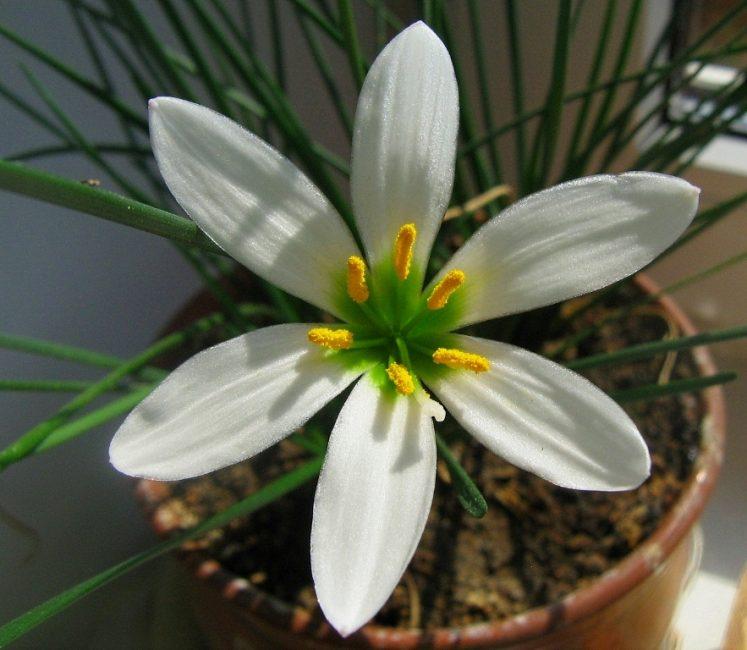Вид здорового цветка