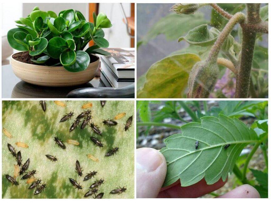 Вредители на комнатных растениях