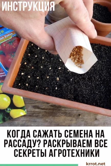 Когда сажать семена на рассаду