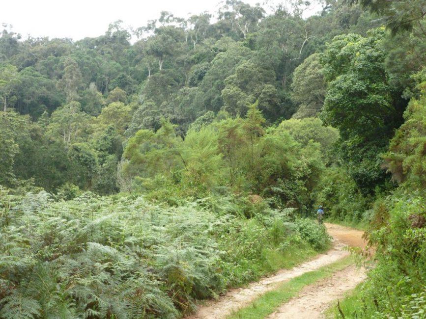 Влажные и жаркие джунгли Восточной Африки – место естественного ареала домашней фиалки