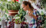 мошки в комнатных растениях как избавиться