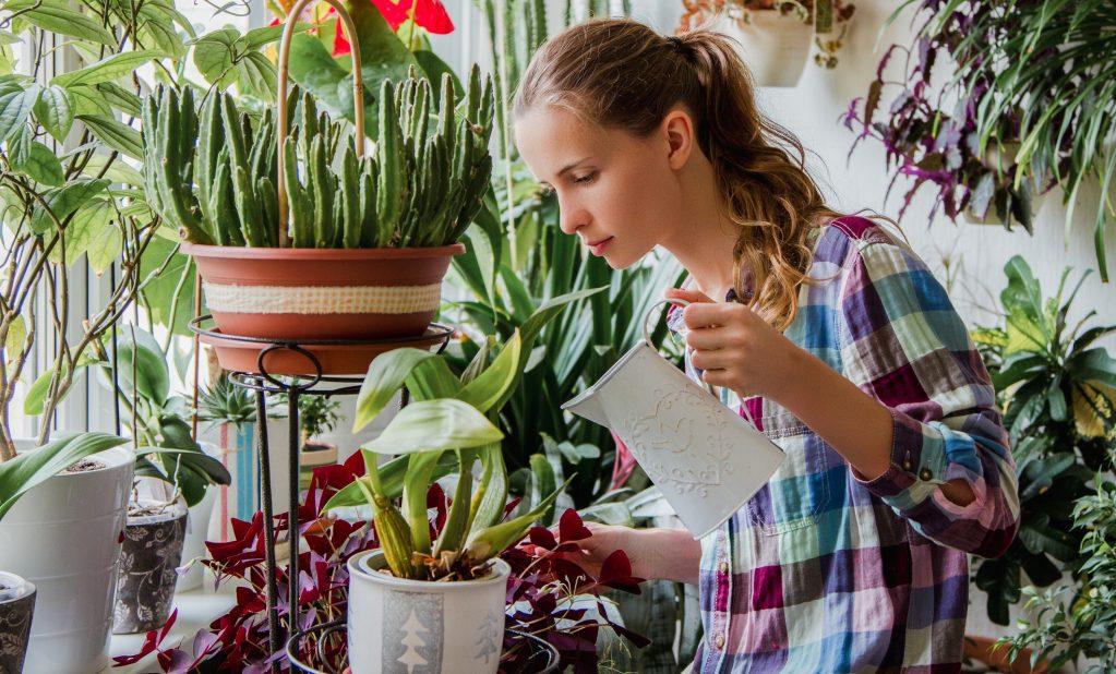 Как вывести мошек из домашних цветов