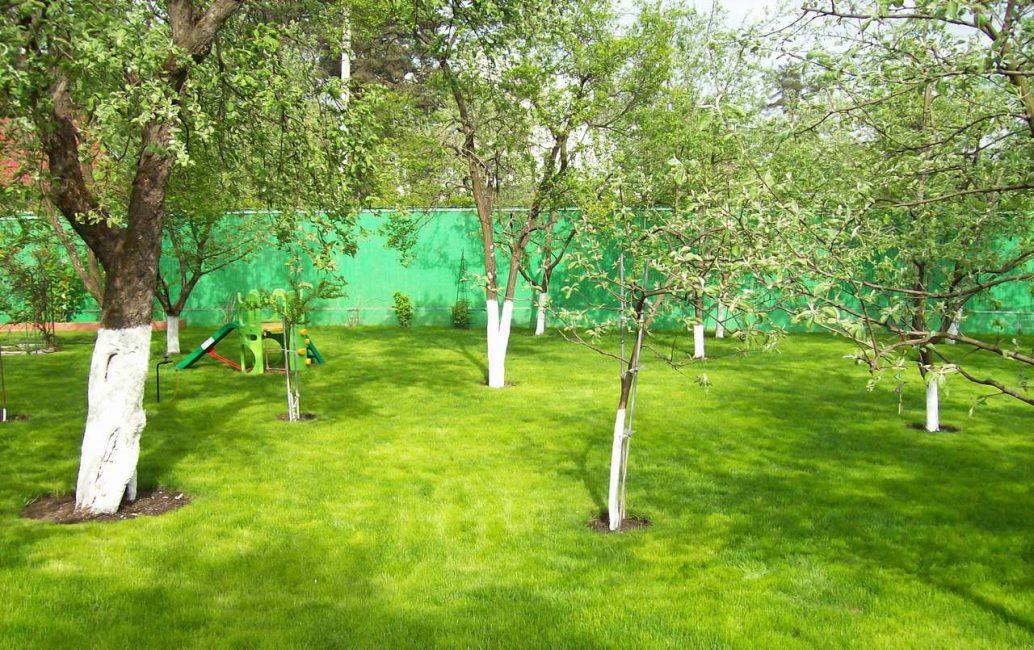 Располагать фруктовые деревья необходимо на расстояниях не менее 3-5 м друг от друга