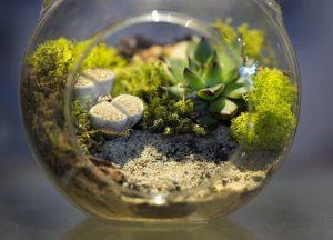 Флорариум своими руками: пошаговая инструкция для начинающих | ТОП-100 Идеи для создания (Фото & Видео)