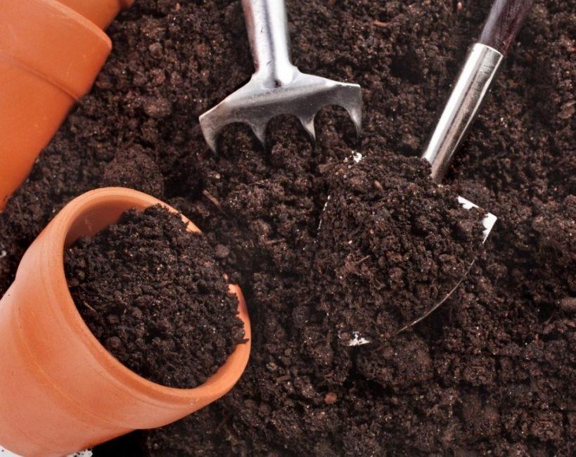 Основные требования к грунту – это его кислотность и мягкость
