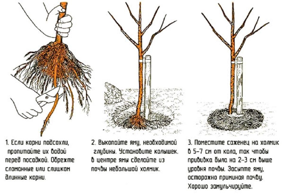 Посадка растений - основные правила