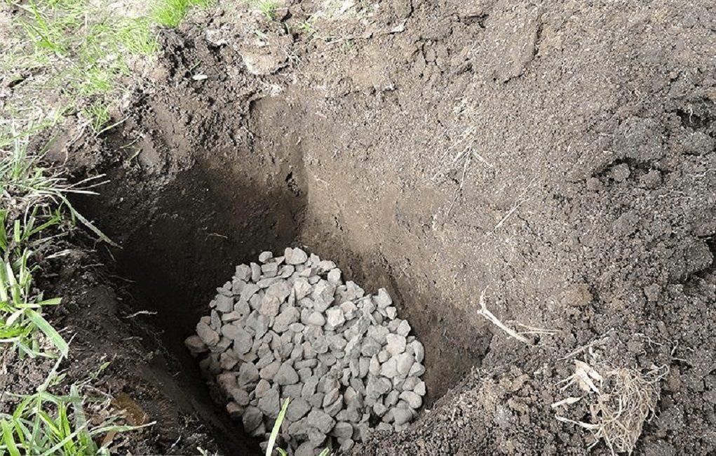 Правильно сделанная посадочная яма под плодовое дерево
