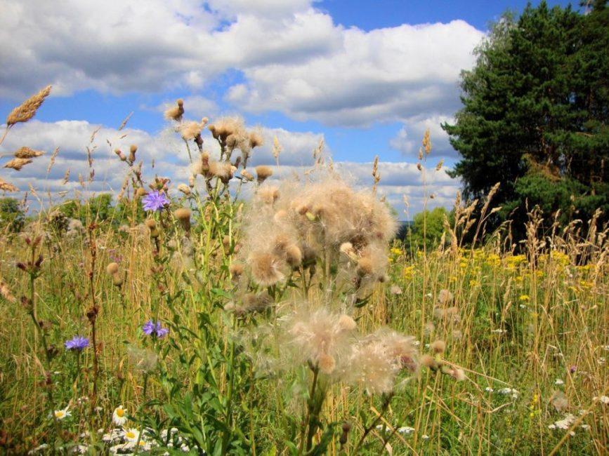 Сорные травы