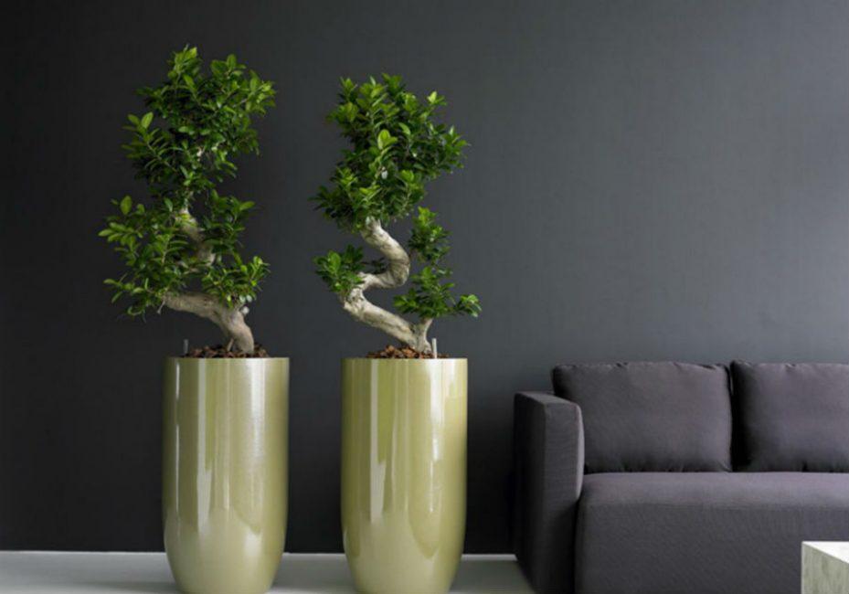 Растения напоминающие деревья