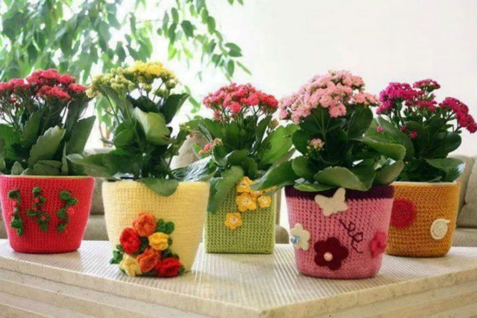 Коллекция из цветов в горшках