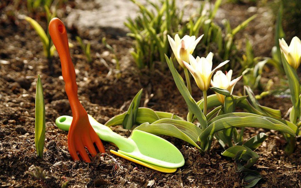 При правильном подходе к земле она не истощается, снабжая огородника урожаем