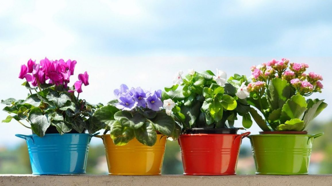 Горшечная группа растений