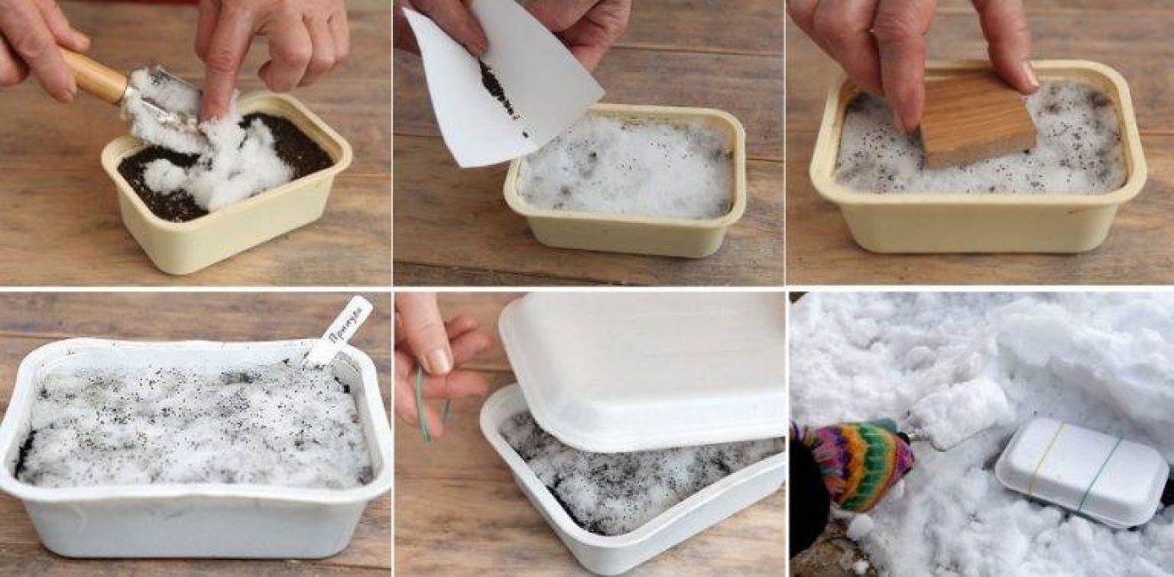 Как подготовить семена к посеву промораживанием