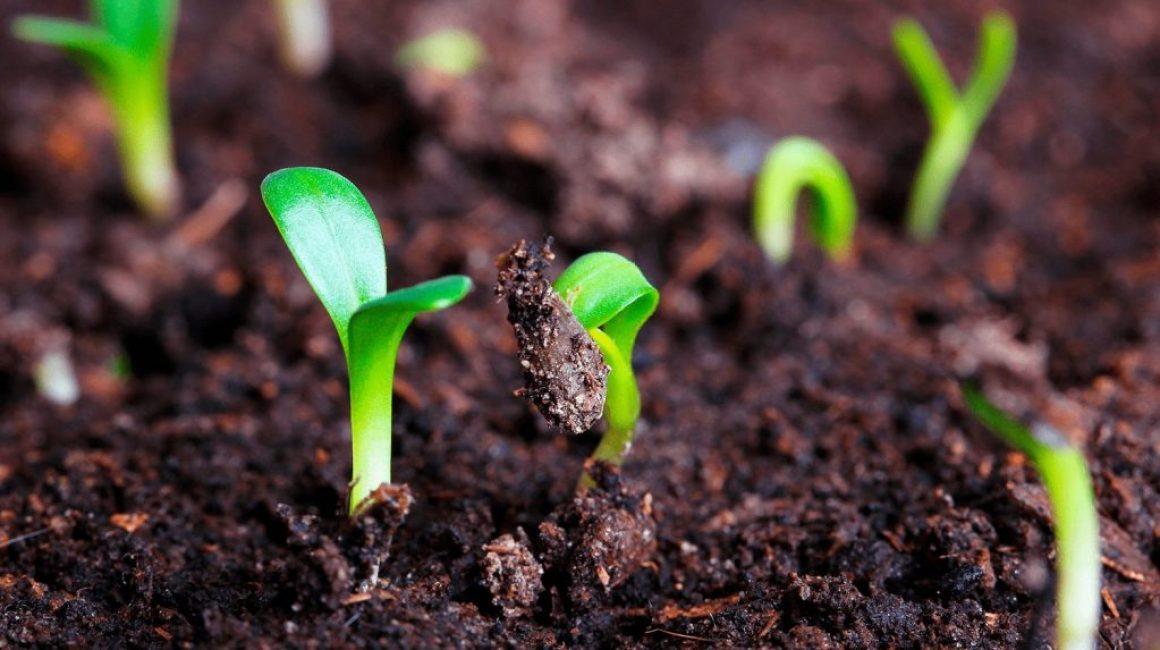 Как стратифицировать семена дома