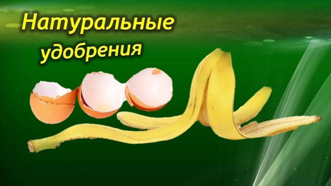 Натуральные удобрения - пищевые отходы