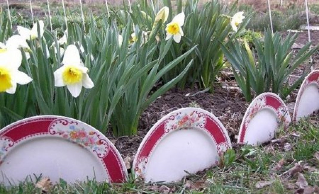 Ограждение для клумбы из мелких фаянсовых тарелок