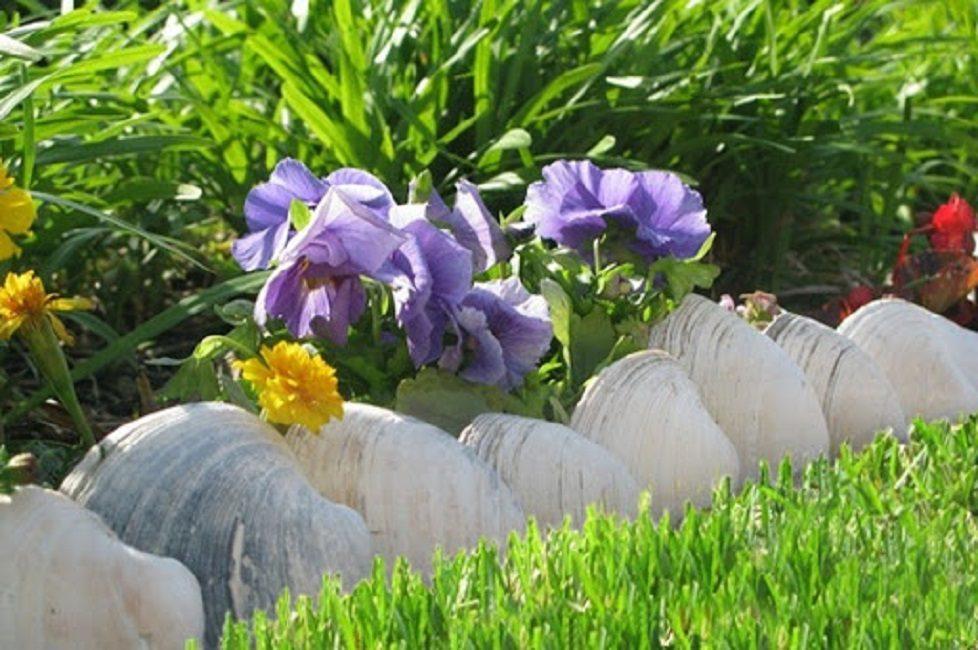 Ракушки моллюска квахог в качестве ограждения для невысоких цветов
