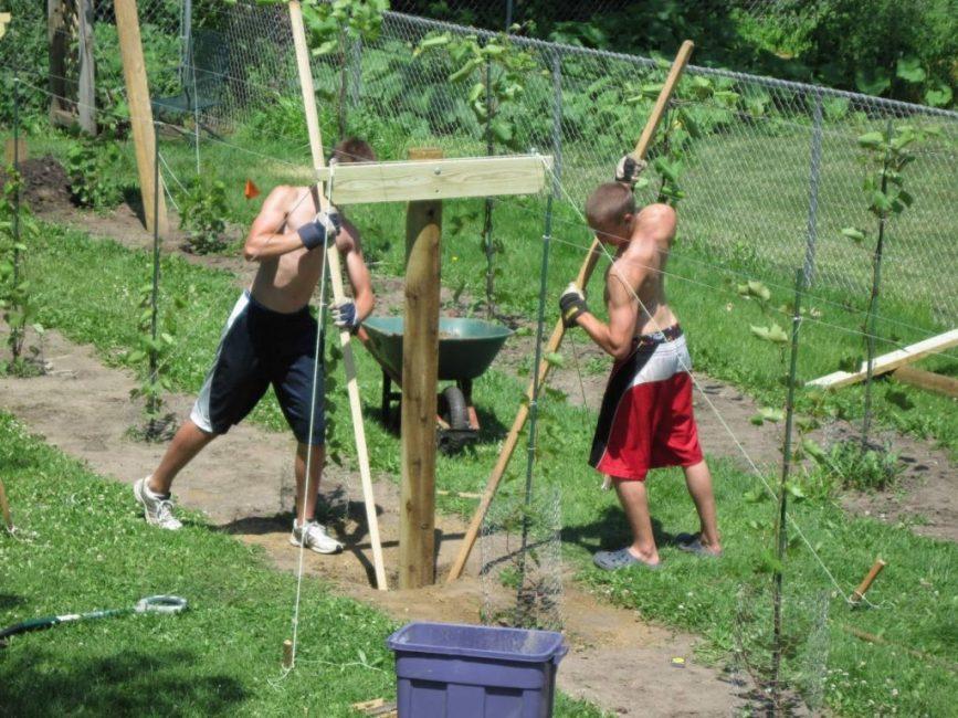 Шпалера для винограда - правила сооружения и установки