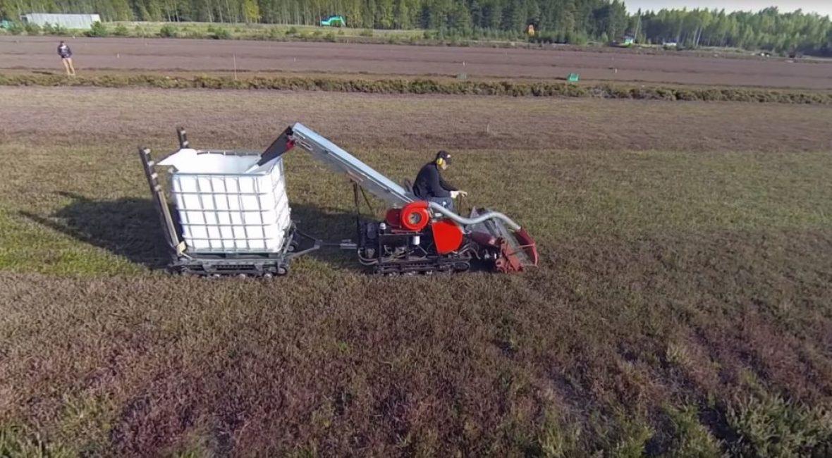 Сбор урожая брусники при помощи ягодного комбайна