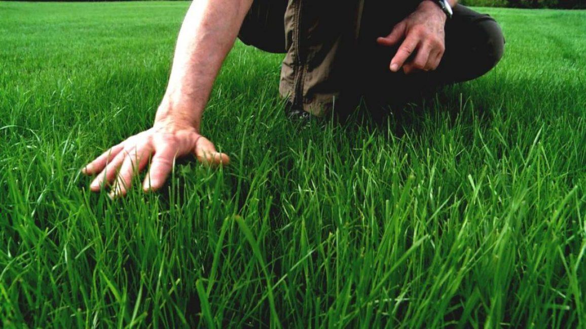 Зеленая лужайка – источник отдыха и покоя