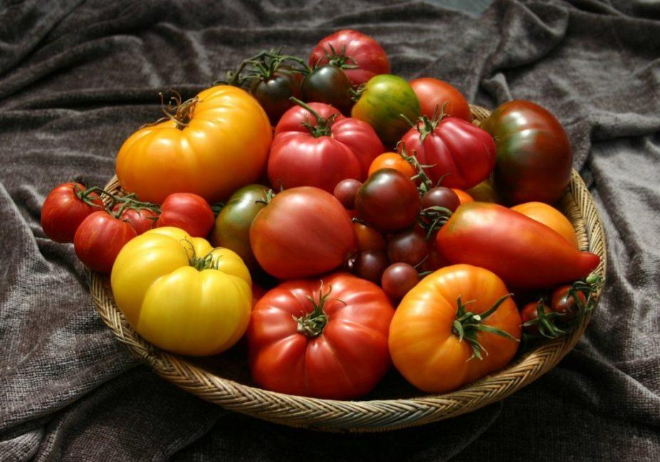 Изобилие сортов штамбовых томатов поражает воображение